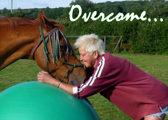 Home Page - Heaven For Horses Rehabilitation Centre