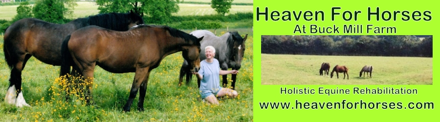 Heaven For Horses - Rehabilitation For Horses.