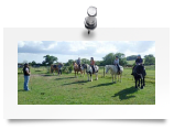 """Parelli Natural Horsemanship Clinic July 2010"""